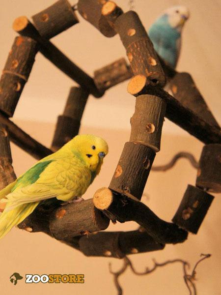 Spiel und Spaß für Vögel