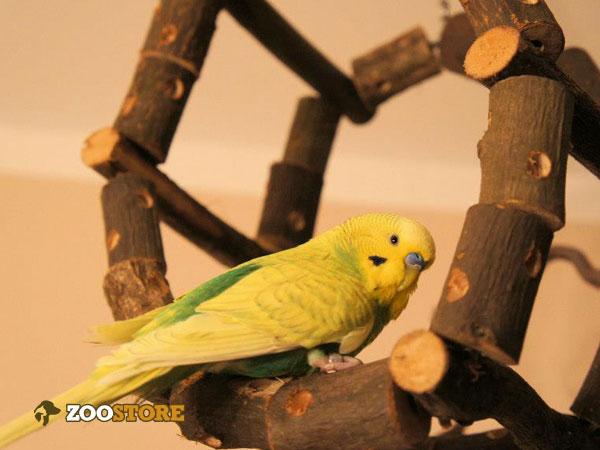 Tolles Spielzeug für Vögel