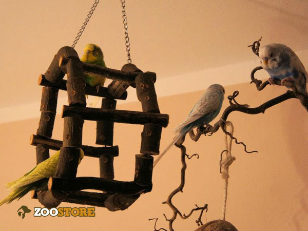 Spielspaß für den Vogel