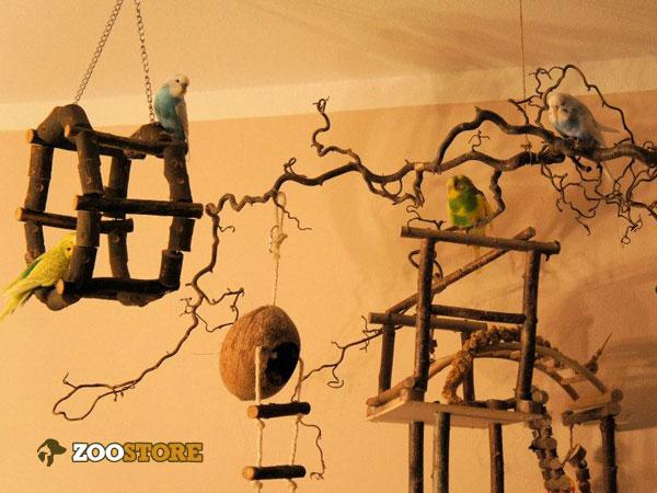 Vogel Spielplatz